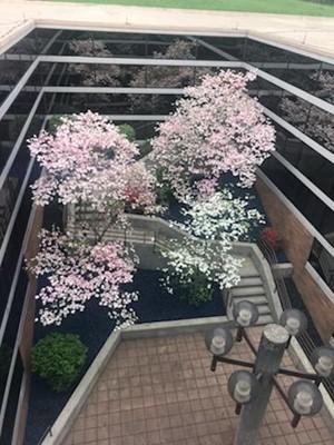 BL Science Club Beautifies Courtyard