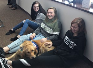ICMS Scarlett Therapy Dog